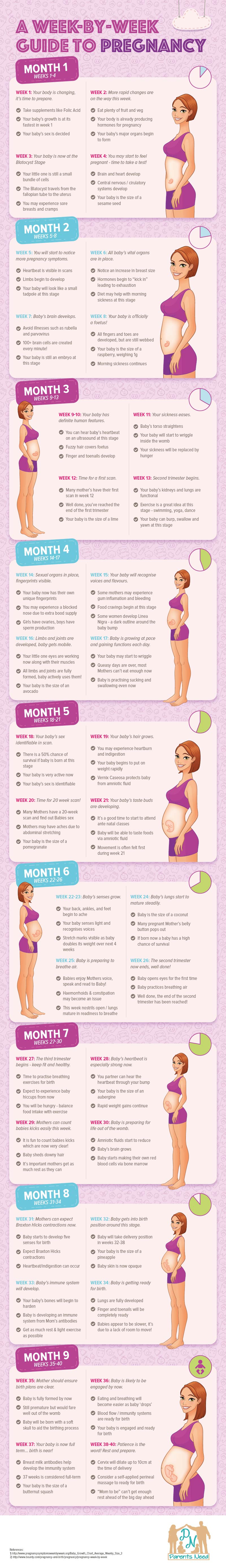 A Week by Week Guide to Pregnancy by ParentsNeed