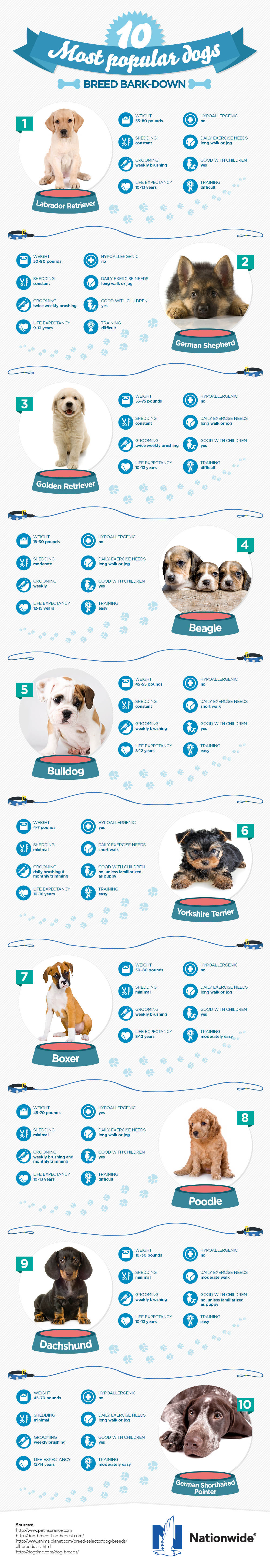The Ten Most Popular Dogs by Nationwide Insurance