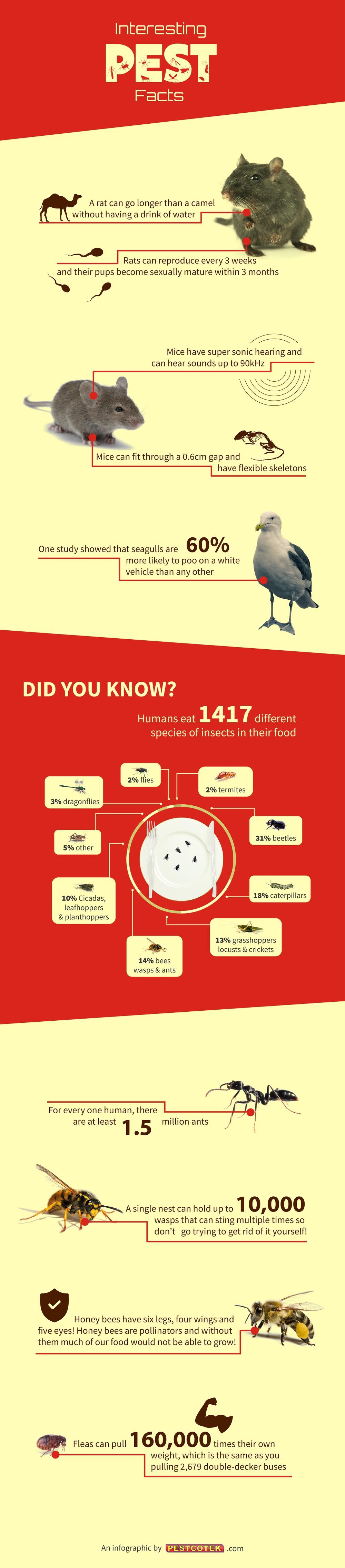 Interesting Pest Facts by Pestcotek