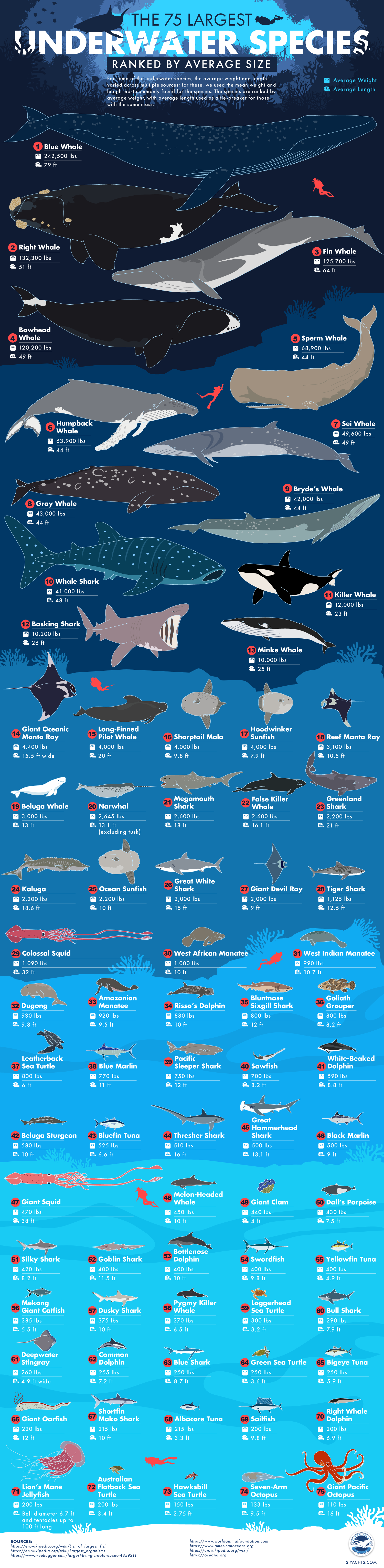 The 75 Largest Underwater Species Ranked by Size
